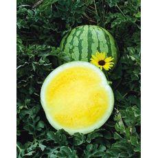 Фото 6191: Арбуз Еллоу Батеркап Yellow Buttercup F1 SAKATA
